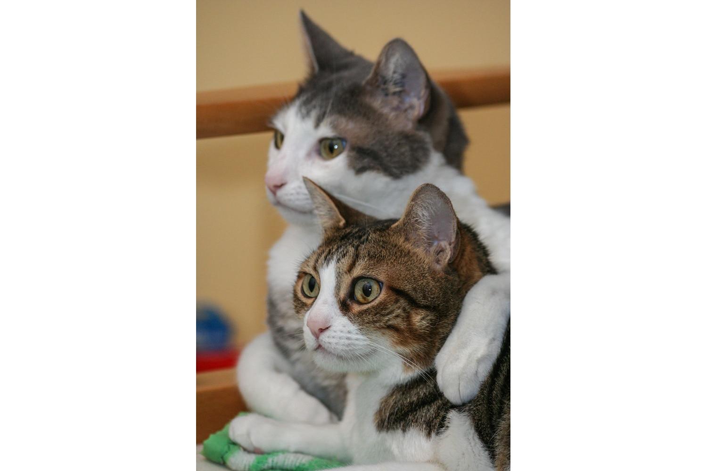 Chats frère et soeur