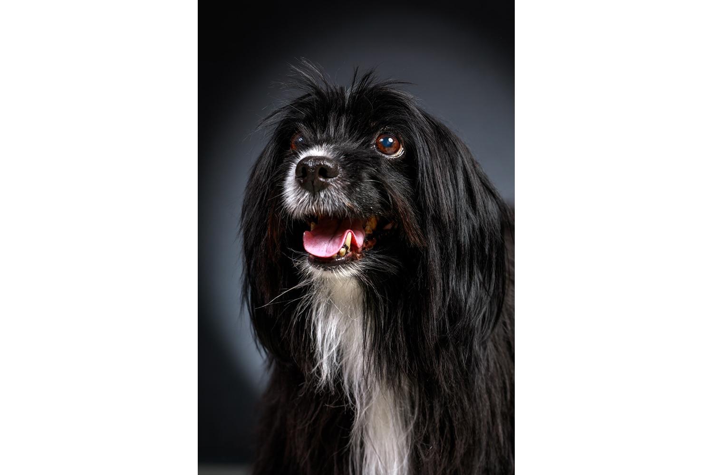 Portrait d'un chien noir